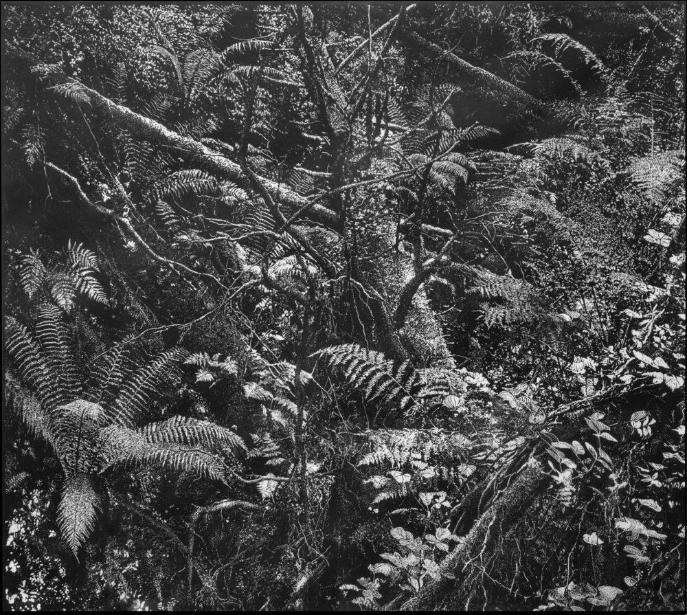 """Lydford Gorge Forest I"""", Linolschnitt, 92 cm x 102 cm, 2017"""