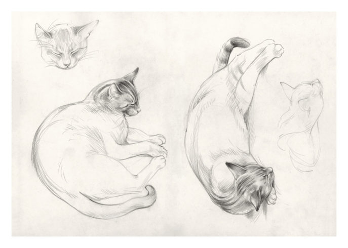 Katzen in Petri, aus dem Lesvos-Skizzenbuch 2017, Bleistift © VG Bild-Kunst, Bonn 2020 / Reinhard Michl, Foto: bildergipfel.de